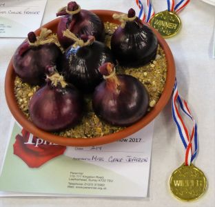 Winner of Special Onion Class 217 For Primary School pupils aged 6-9 - Miss Grace Jefferson